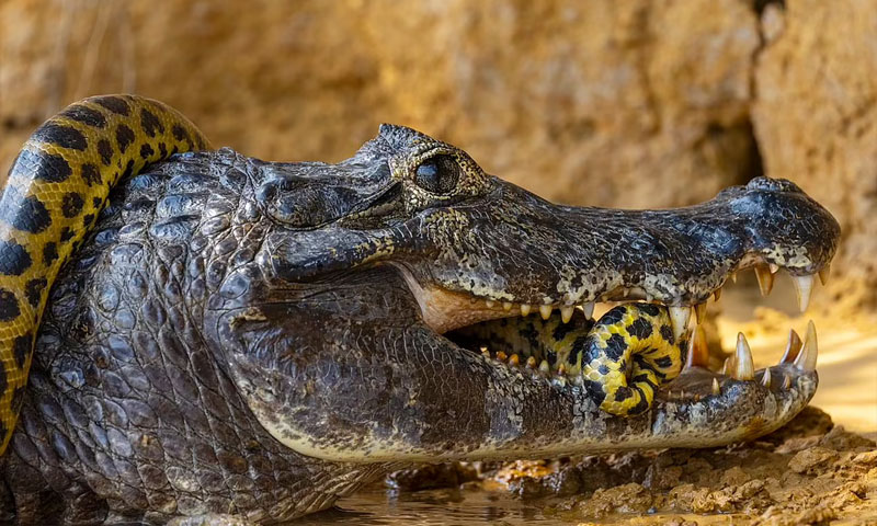 Fight the terrible snake and the killer crocodile